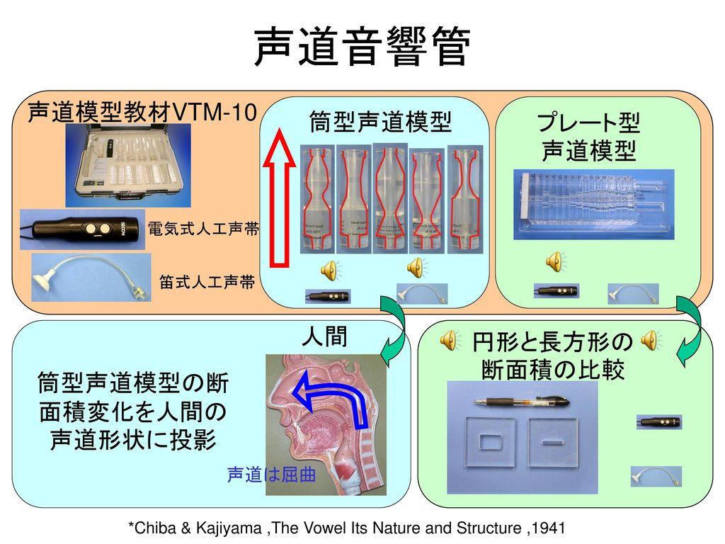 筒型声道模型の断面積変化を人間の声道形状に投影