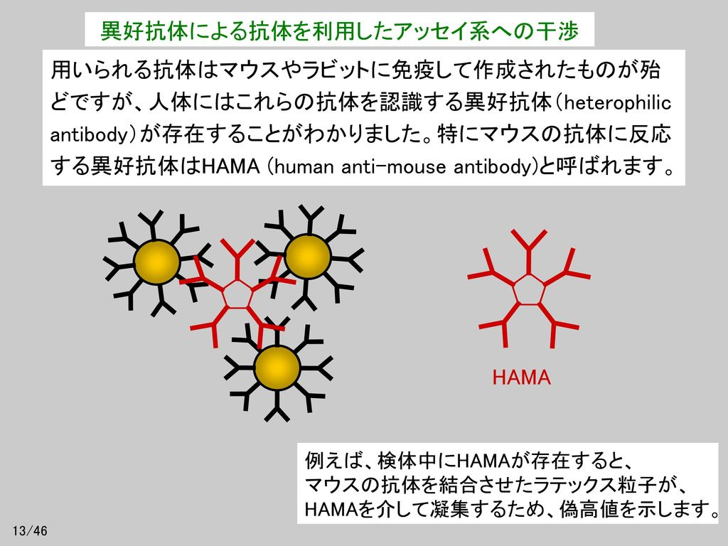 異好抗体による抗体を利用したアッセイ系への干渉