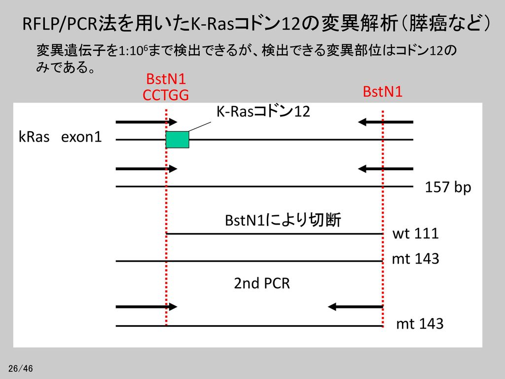 RFLP/PCR法を用いたK-Rasコドン12の変異解析(膵癌など)