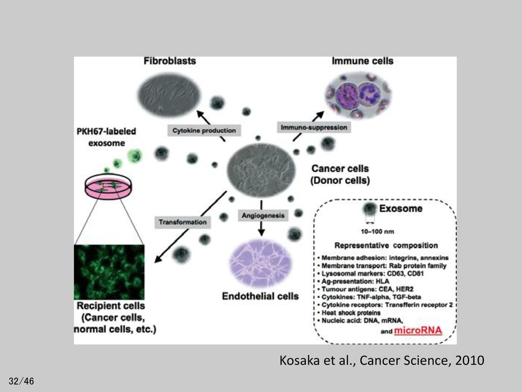 Kosaka et al., Cancer Science, 2010