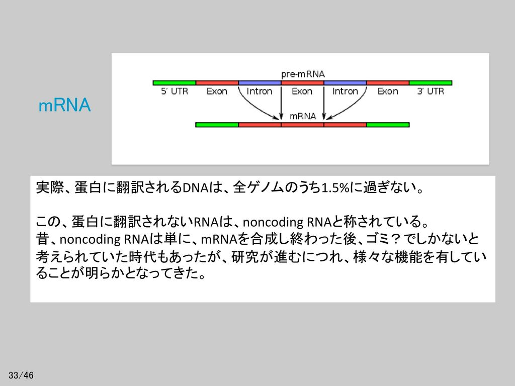 mRNA 実際、蛋白に翻訳されるDNAは、全ゲノムのうち1.5%に過ぎない。