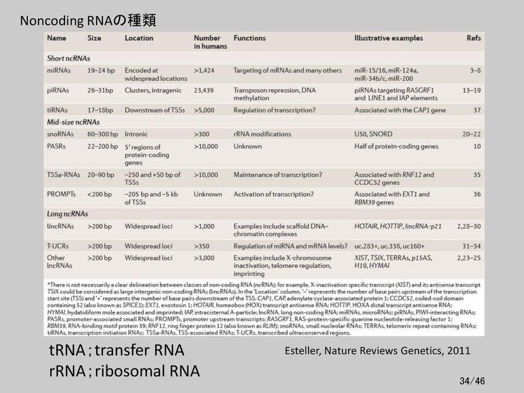 tRNA;transfer RNA rRNA;ribosomal RNA Noncoding RNAの種類