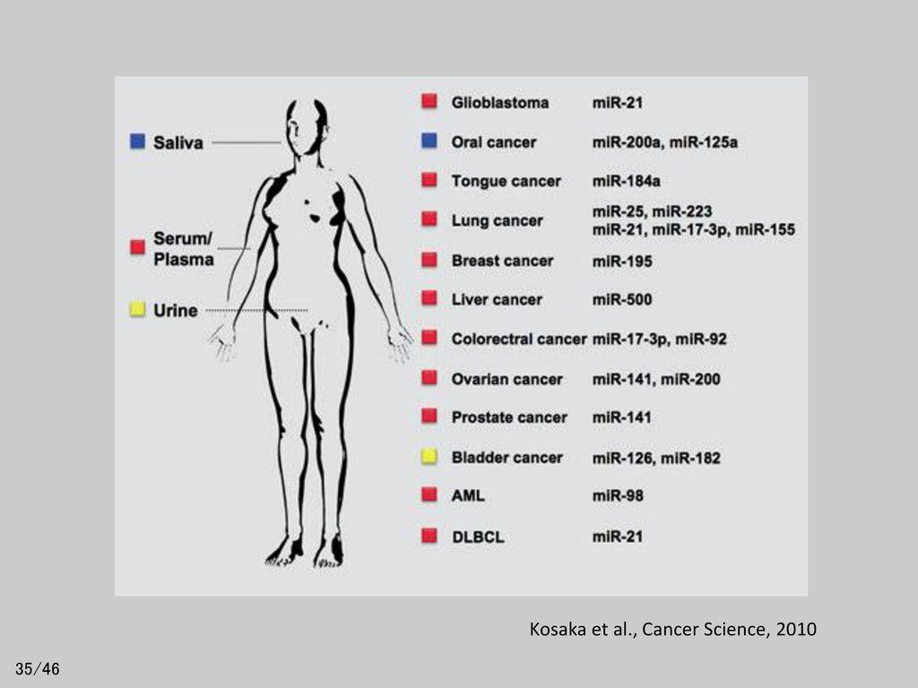 Kosaka et al., Cancer Science, 2010
