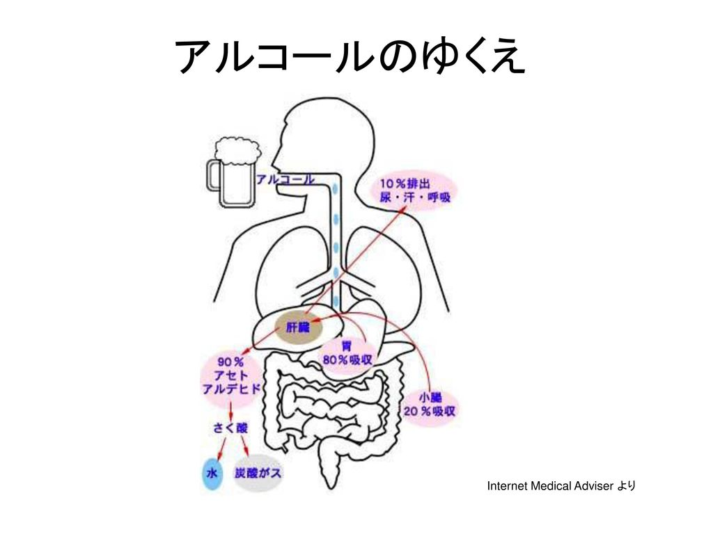 Internet Medical Adviser より
