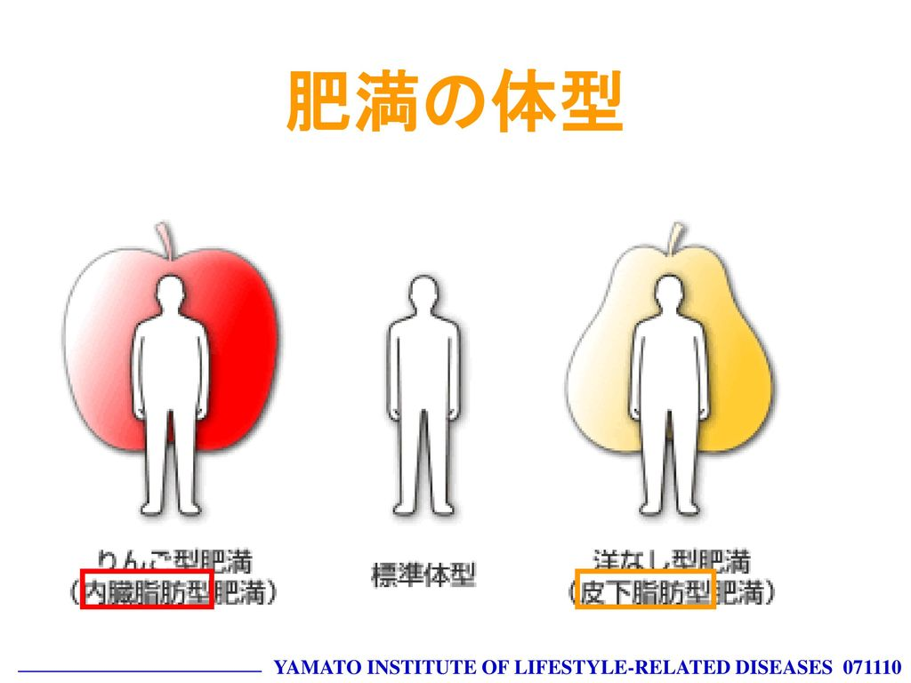 肥満の体型 YAMATO INSTITUTE OF LIFESTYLE-RELATED DISEASES