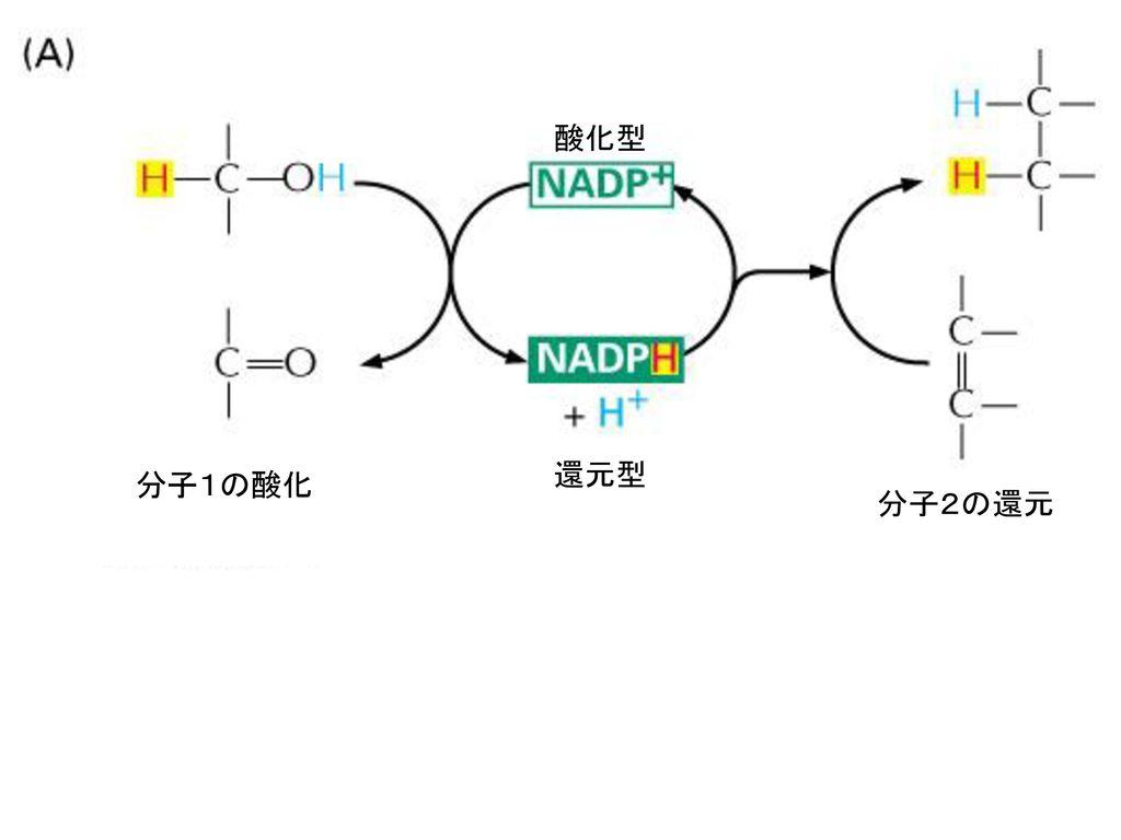 酸化型 還元型 分子1の酸化 分子2の還元