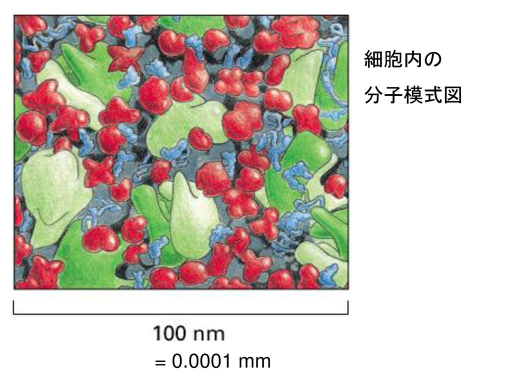 細胞内の 分子模式図 = 0.0001 mm