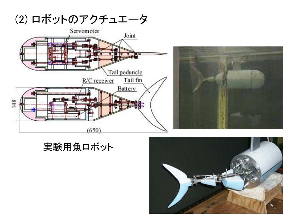 (2) ロボットのアクチュエータ 実験用魚ロボット