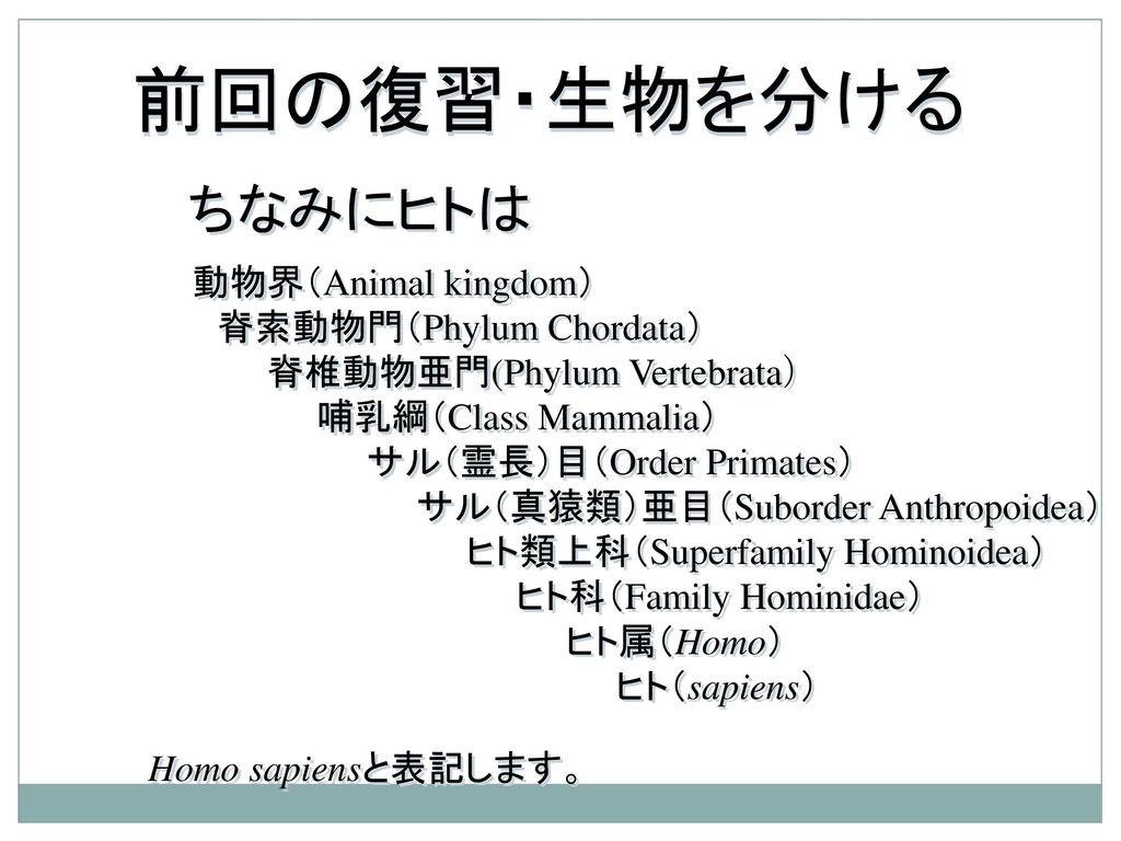 霊長類ヒト科動物図鑑 【1】   Kiranahキラナ スピリ …