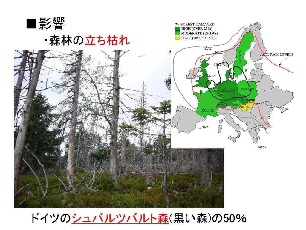 ■影響 ・森林の立ち枯れ ドイツのシュバルツバルト森(黒い森)の50%