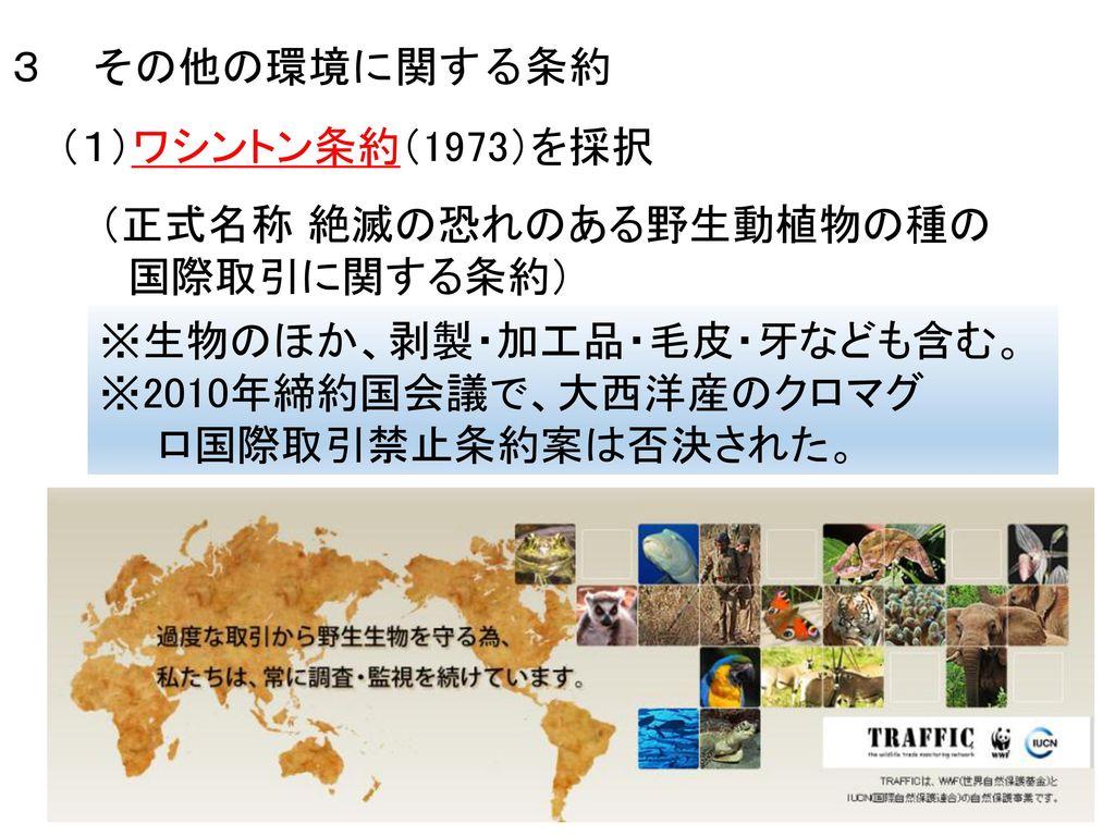 3 その他の環境に関する条約 (1)ワシントン条約(1973)を採択. (正式名称 絶滅の恐れのある野生動植物の種の. 国際取引に関する条約) ※生物のほか、剥製・加工品・毛皮・牙なども含む。