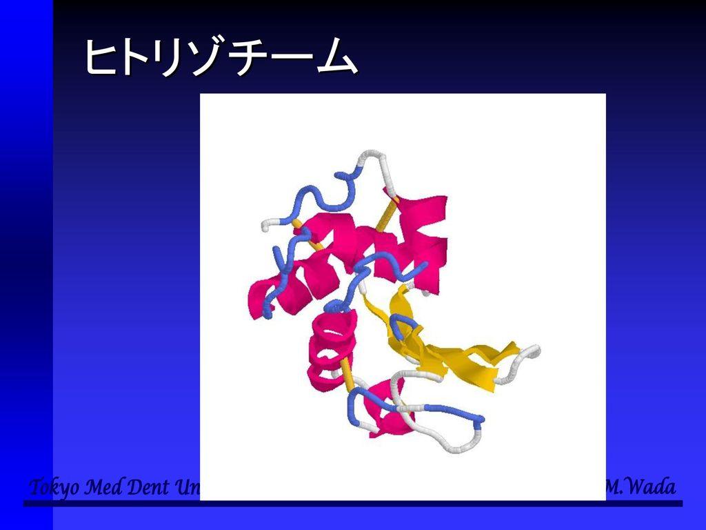 細胞と多様性の 生物学 第4回 細胞におけるエネルギー産生 と化学反応のネットワーク 和田 勝 東京医科歯科大学教養部.
