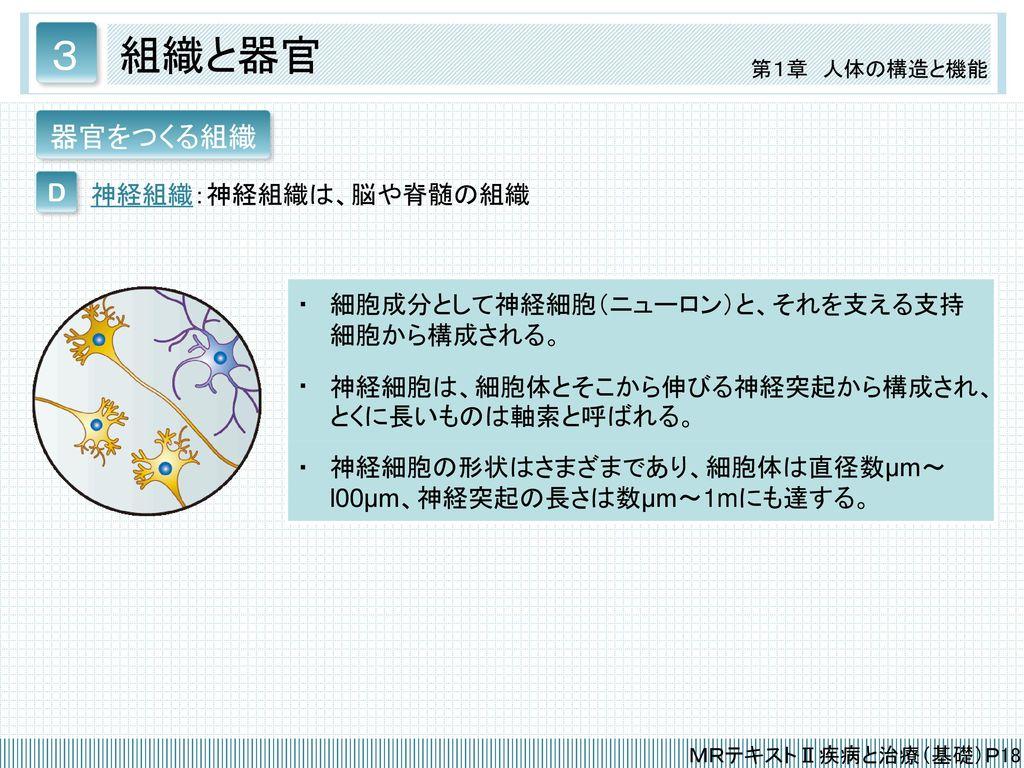 3 組織と器官 器官をつくる組織 D 神経組織:神経組織は、脳や脊髄の組織 ・
