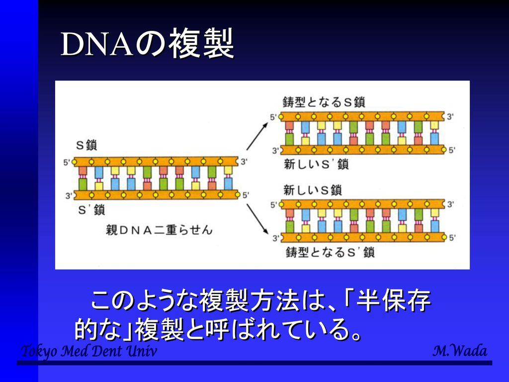 細胞と多様性の 生物学 第3回 転写と翻訳 和田 勝 東京医科歯科大学教養部.