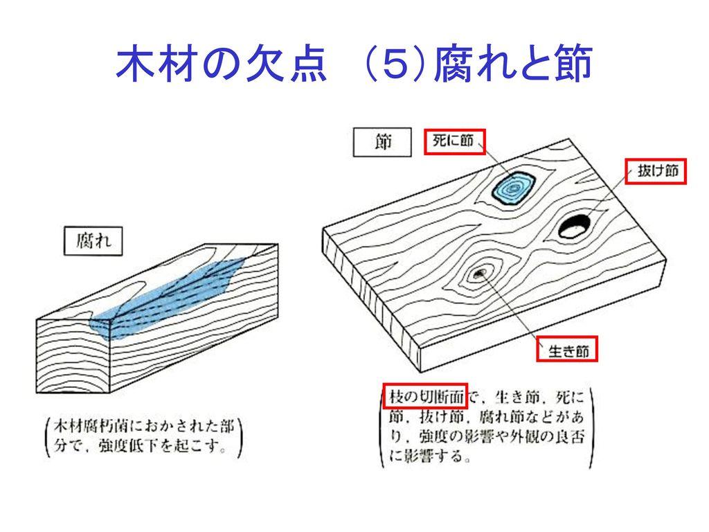 木材の欠点 (5)腐れと節