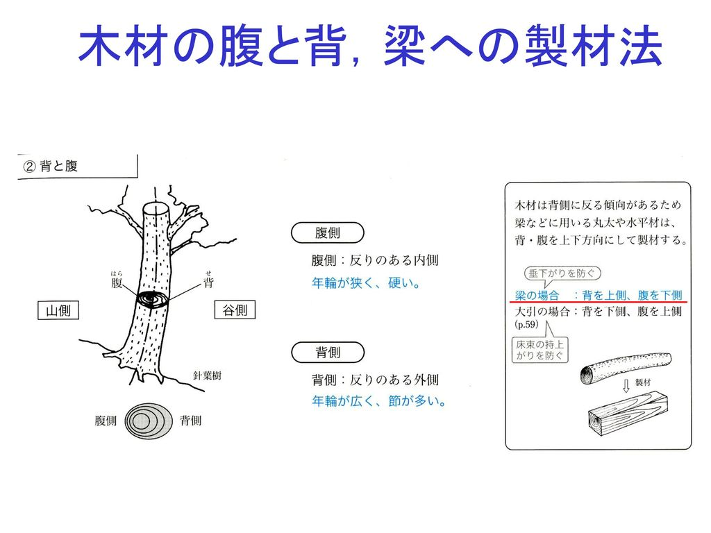 木材の腹と背,梁への製材法