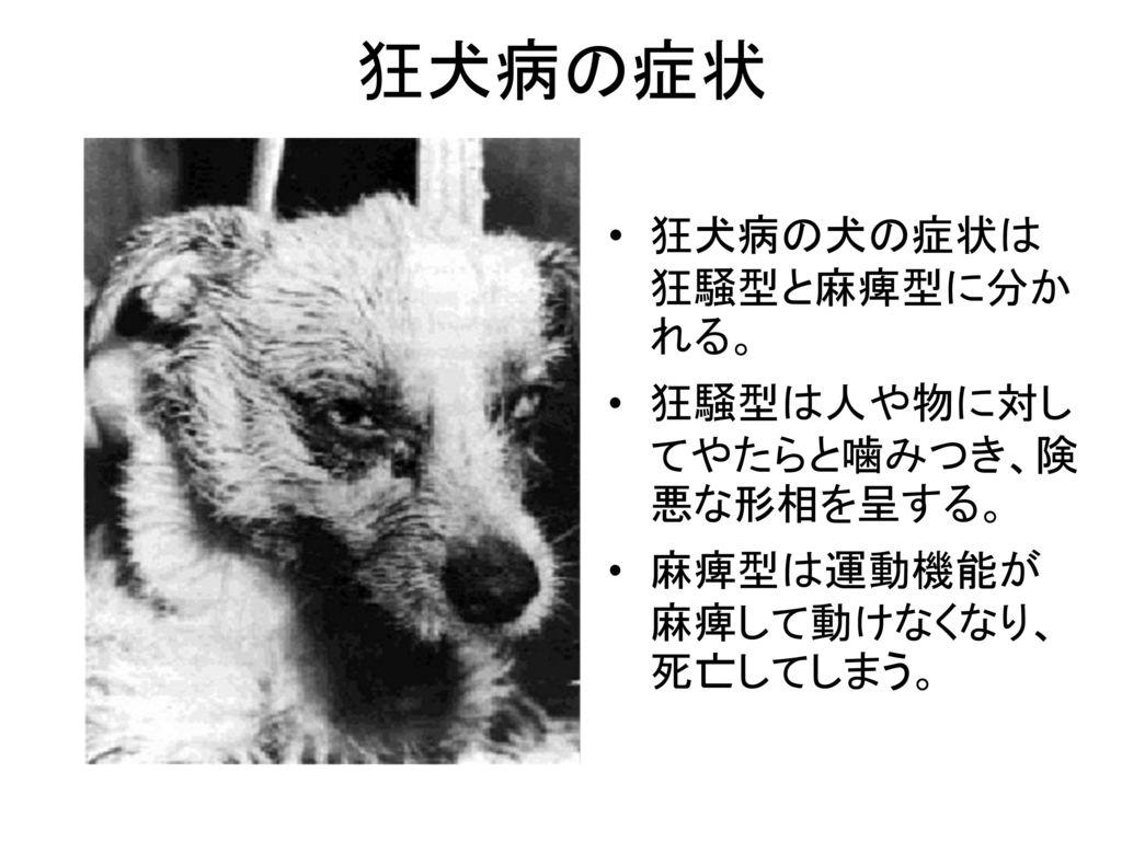 狂犬病 忘れ去られている恐ろしい病気.
