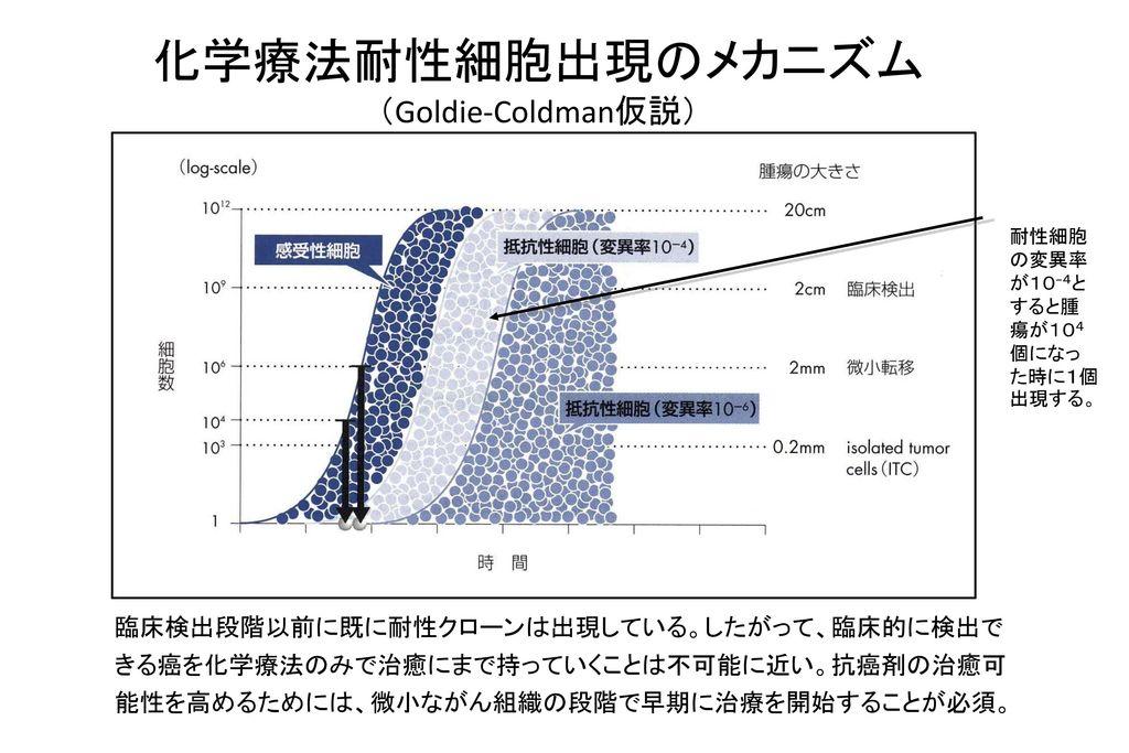 化学療法耐性細胞出現のメカニズム (Goldie-Coldman仮説)