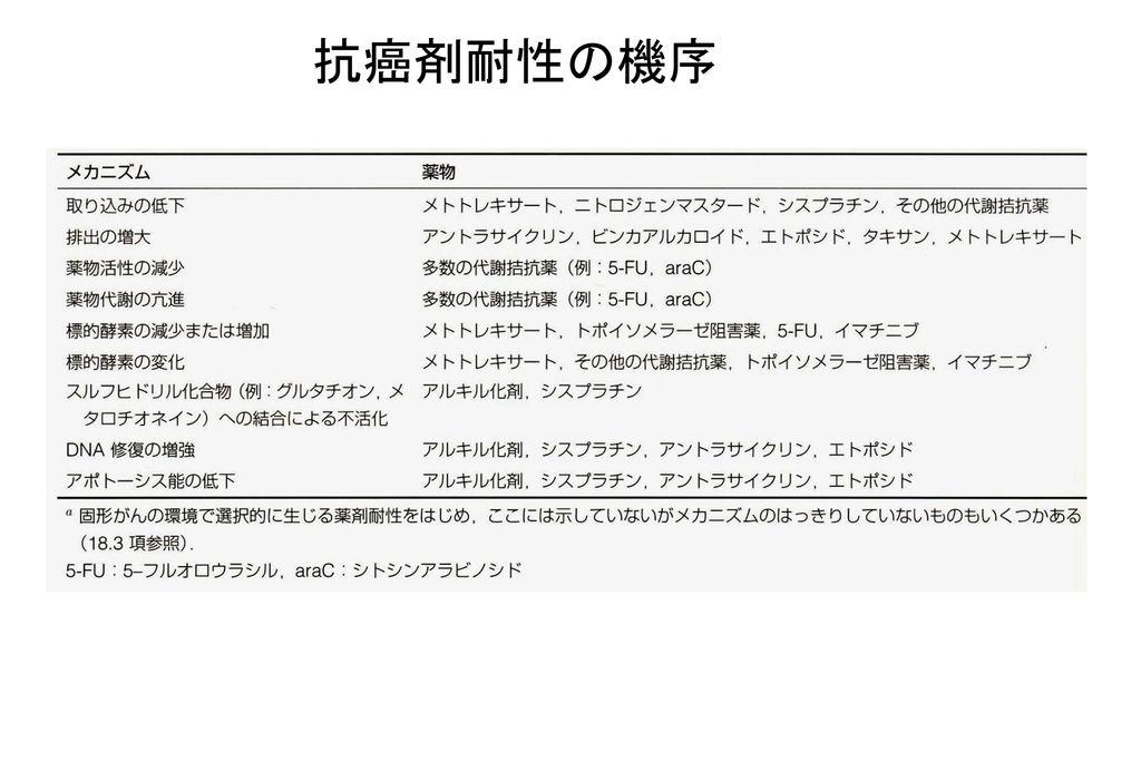 11/04/08 抗癌剤耐性の機序 47