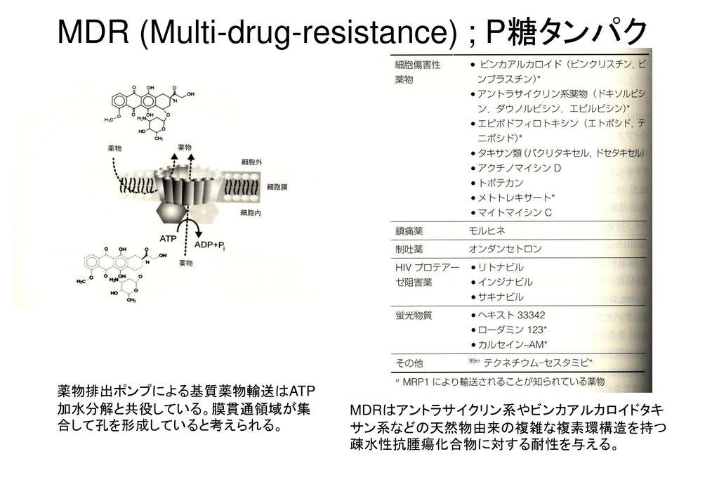 MDR (Multi-drug-resistance) ; P糖タンパク