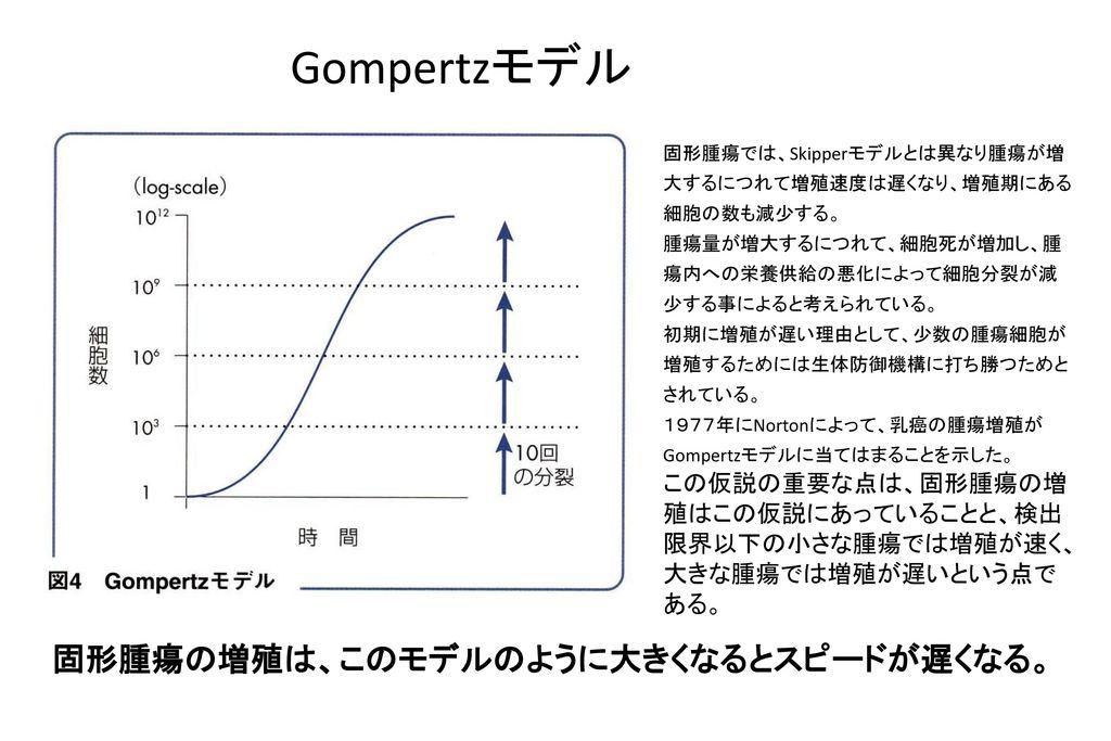 Gompertzモデル 固形腫瘍の増殖は、このモデルのように大きくなるとスピードが遅くなる。