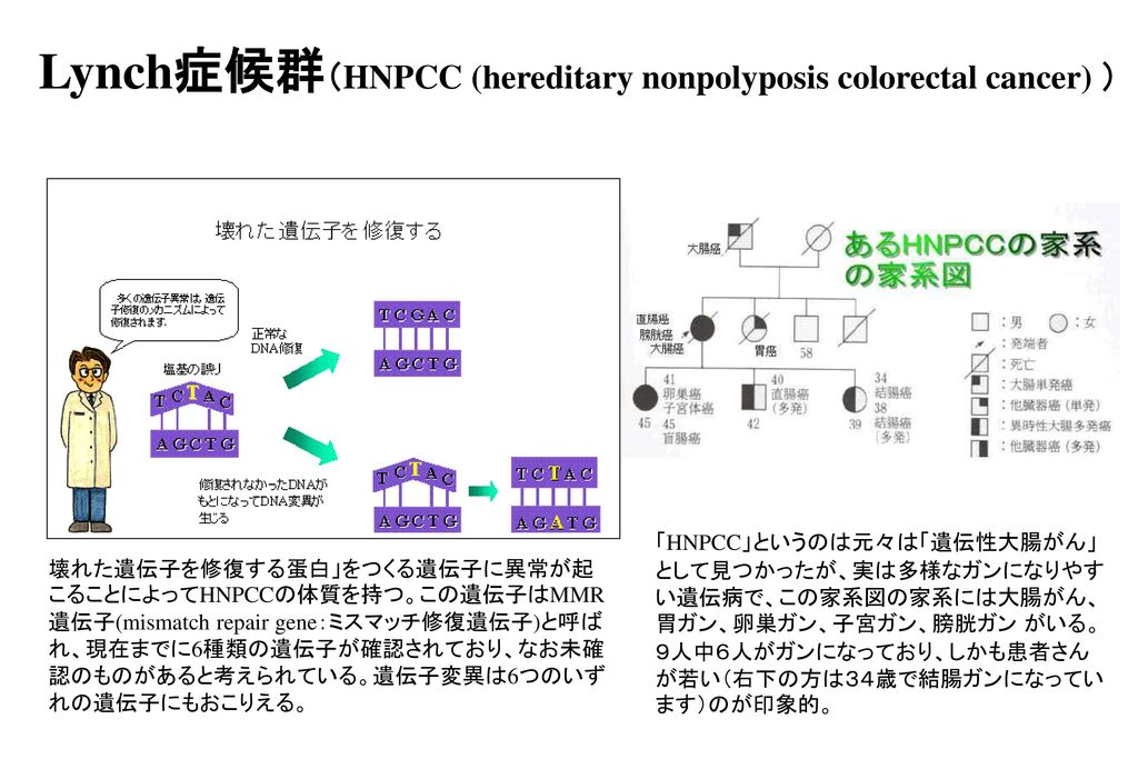 Lynch症候群(HNPCC (hereditary nonpolyposis colorectal cancer) )