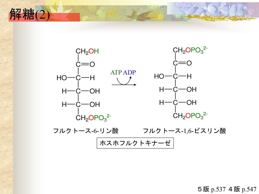 解糖(2) ATP ADP ホスホフルクトキナーゼ フルクトース-1,6-ビスリン酸 フルクトース-6-リン酸