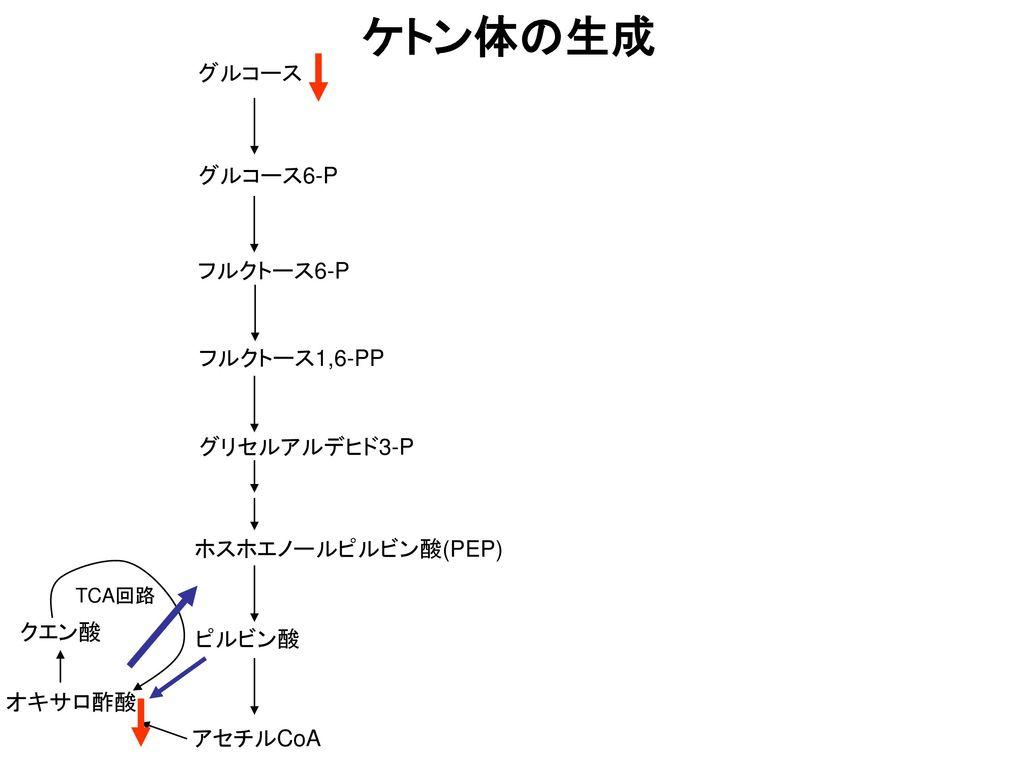 ケトン体の生成 グルコース グルコース6-P フルクトース6-P フルクトース1,6-PP グリセルアルデヒド3-P