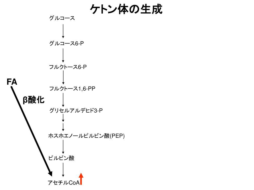 ケトン体の生成 FA β酸化 グルコース グルコース6-P フルクトース6-P フルクトース1,6-PP グリセルアルデヒド3-P