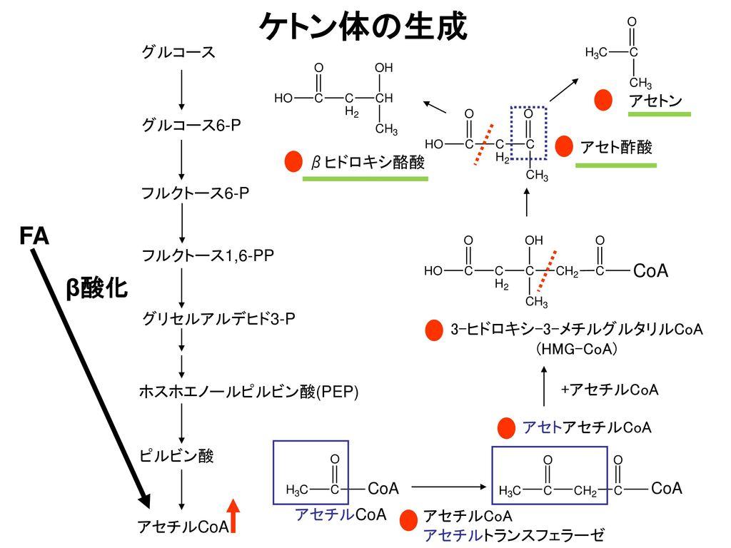 ケトン体の生成 FA β酸化 CoA グルコース アセトン グルコース6-P アセト酢酸 βヒドロキシ酪酸 フルクトース6-P