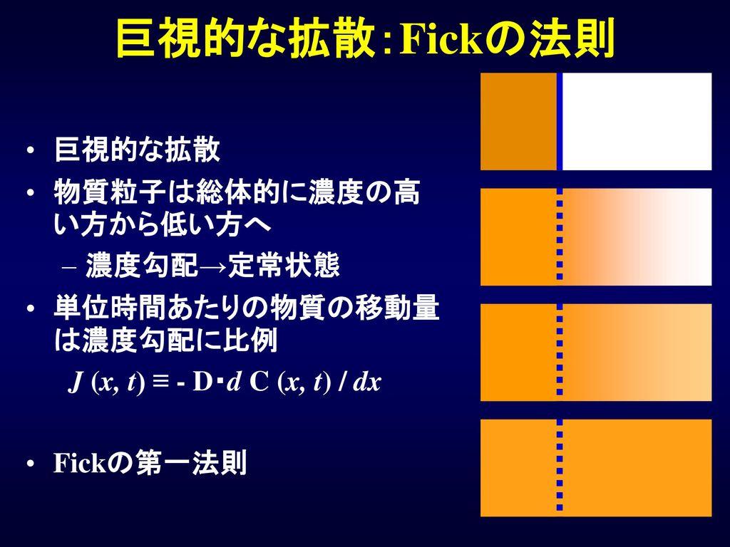 巨視的な拡散:Fickの法則 巨視的な拡散 物質粒子は総体的に濃度の高い方から低い方へ 濃度勾配→定常状態