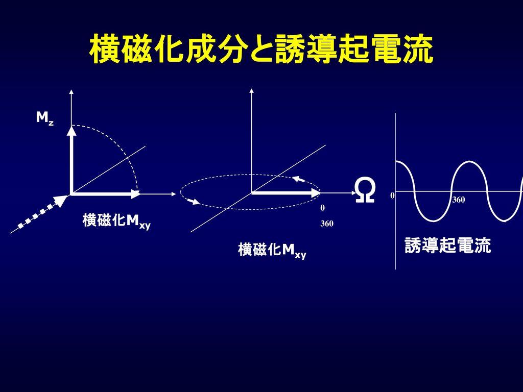 横磁化成分と誘導起電流 Mz Ω 360 360 横磁化Mxy 誘導起電流 横磁化Mxy