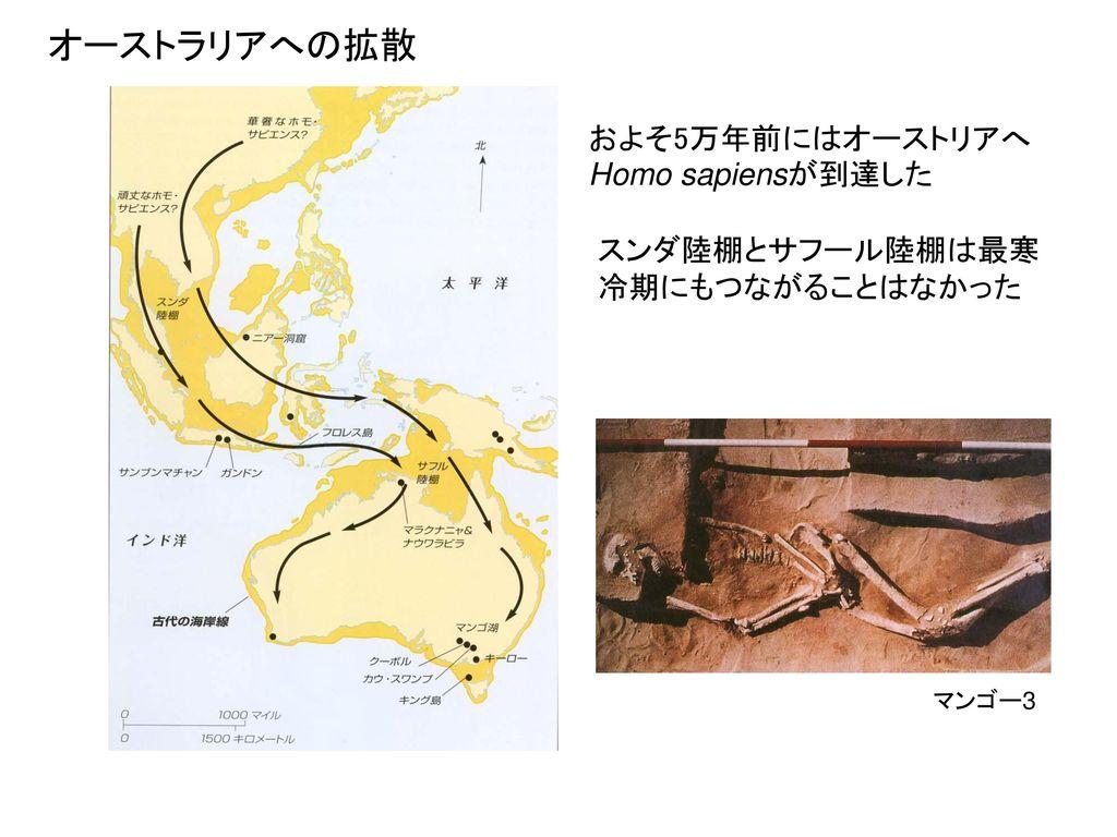 オーストラリアへの拡散 およそ5万年前にはオーストリアへHomo sapiensが到達した