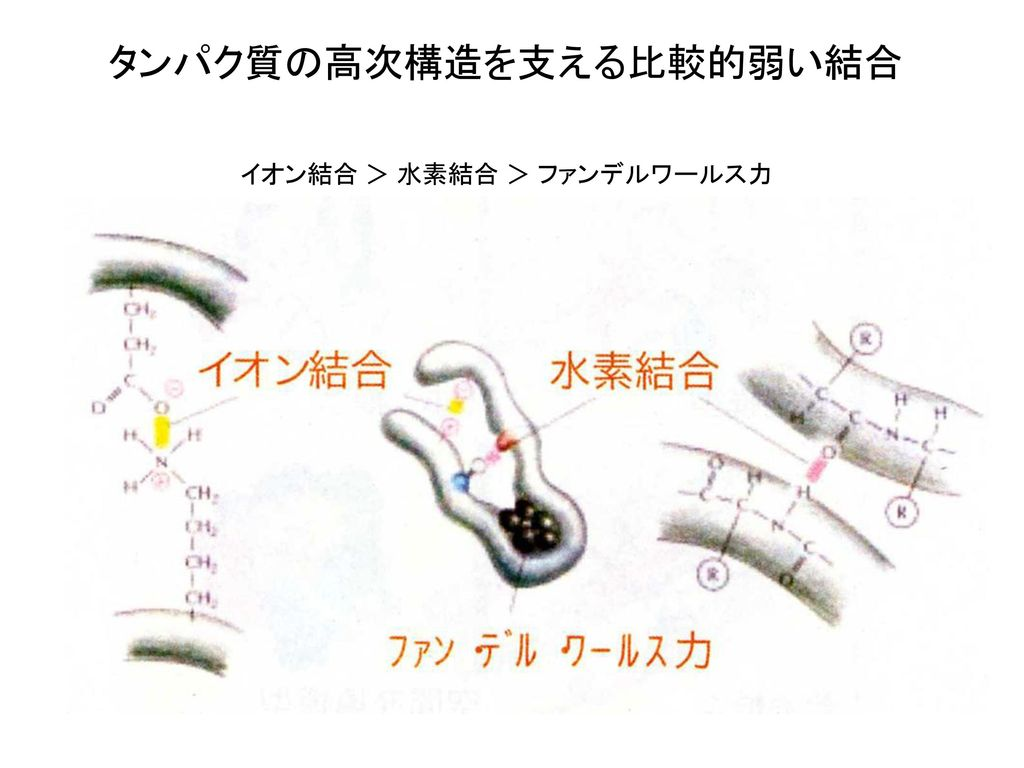タンパク質の高次構造を支える比較的弱い結合