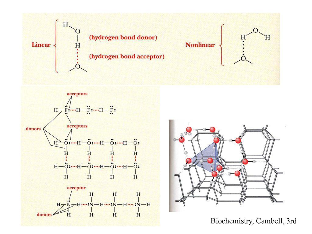 Biochemistry, Cambell, 3rd