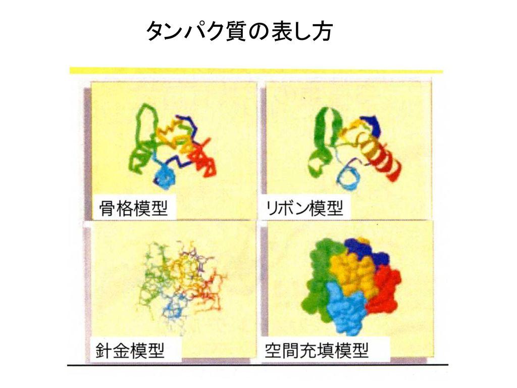 タンパク質の表し方