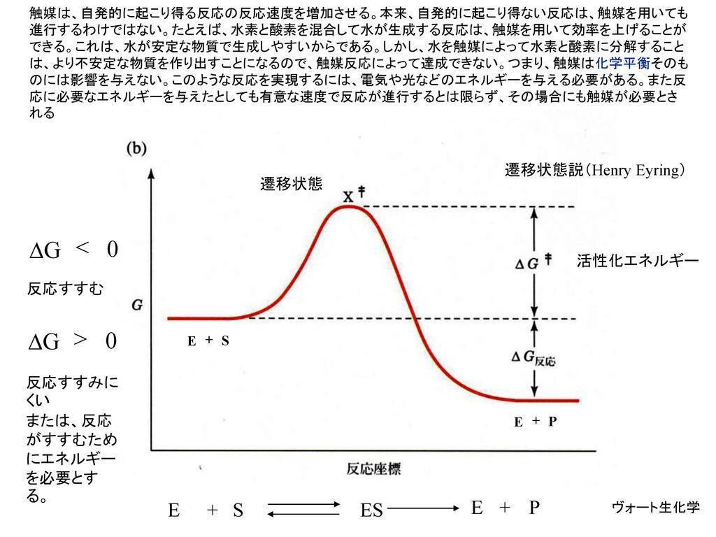 DG < DG > E + S ES E + P 遷移状態説(Henry Eyring) 遷移状態 活性化エネルギー 反応すすむ
