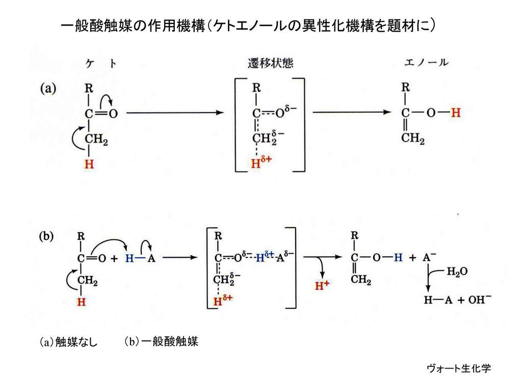 一般酸触媒の作用機構(ケトエノールの異性化機構を題材に)