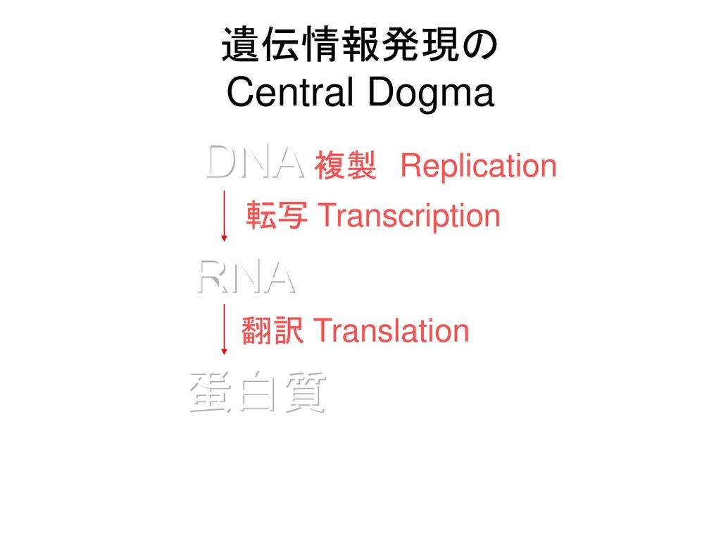 遺伝情報発現の Central Dogma DNA 複製 Replication 転写 Transcription RNA