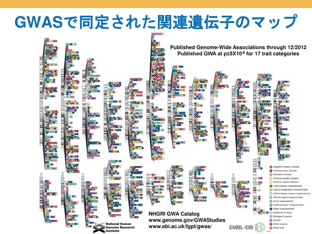GWASで同定された関連遺伝子のマップ Published Genome-Wide Associations through 12/2012
