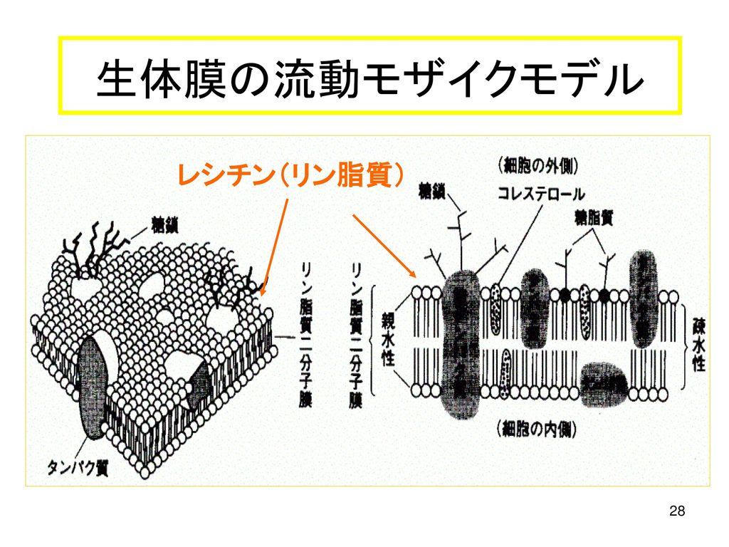 立体異性体(1) 立体異性体: 同じ分子式だが、立体的な形だけが ...