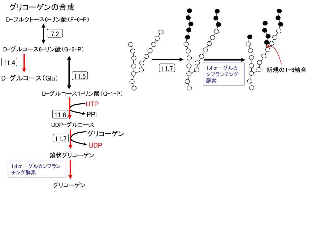外膜 内膜 R- (CH2)n -COOH R-(C...