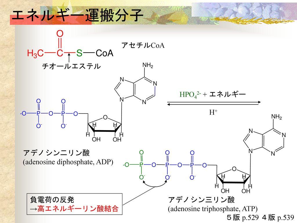 と は アデノシン 三 酸 リン