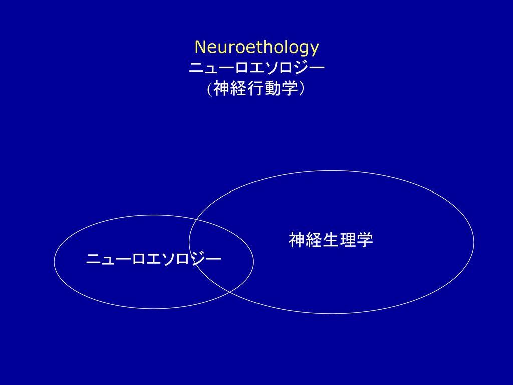 Cognitive Brain Science) ニュ...