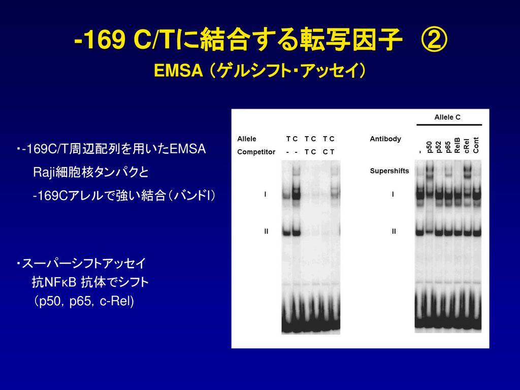 関節リウマチ感受性遺伝子 FCRL3...
