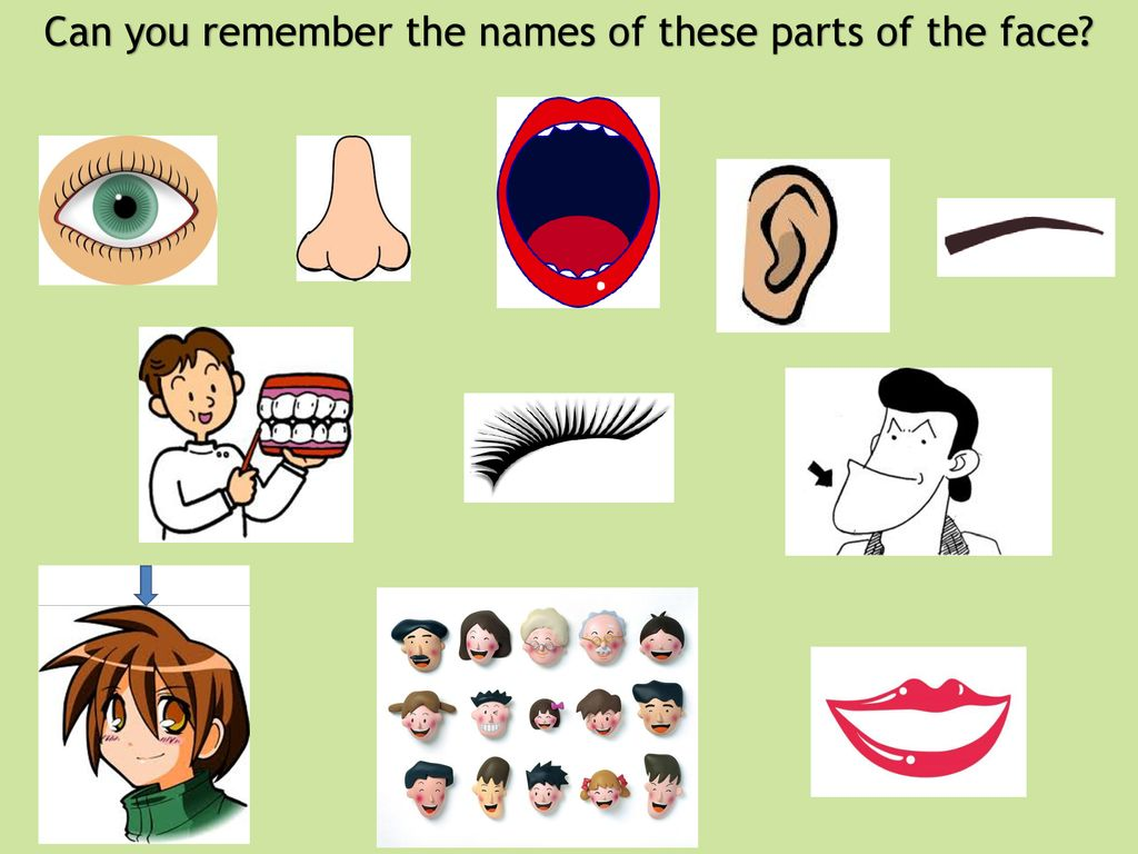 kao かお parts of the face ppt download